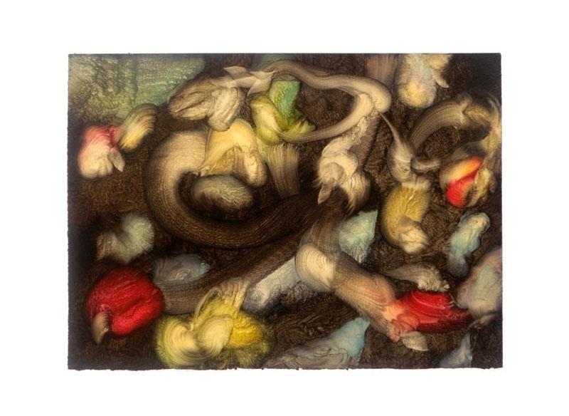 Sema Castro Serie El jardín de papel- las más raras flores 2010 Óleo sobre papel - 36,5 x 52 cm